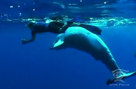 this footage was shot by Marnie Harrison of Wild Focus Films. Given our small budget we opted to focus on shooting the story and not try to hard to get video of the whales given we knew that we could collaborate with Marnie who has spent years working with both Rebecca and the whales.
